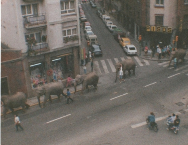 elefantes na carretera de la costa2